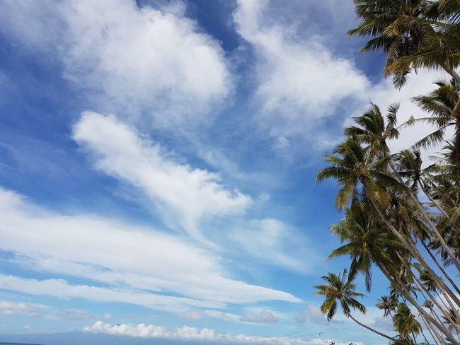 🏝 Siquijor Island 🏝 Philippines EyeEmNewHere First Eyeem Photo Eyeem Philippines No Edits No Filters Samsung Galaxy S7 Travel Travel Photography Vacations Nature Beauty In Nature Leisure Activity Tourism Wilderness Beach No People Outdoors Scenics Low Angle View Tree Sky Cloud - Sky Day Blue The Secret Spaces