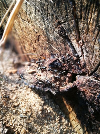 Ants Spring LoveNature Sunlight Outdoors Nature No People Wood Close-up High Angle View Day First Eyeem Photo
