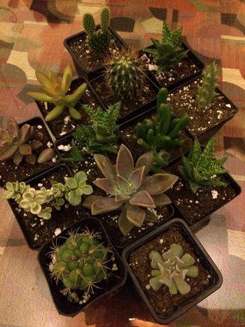 Cactus Cactus_maramia EyeEm Nature Lover I Love Cactus