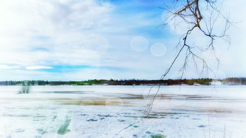 Showcase April Spring Melting Snow River Beautiful Ice Snow Outdoors Nature Bush Branches Minimalist Check This Out Hello World Copy Space Popular Bookeh Popular Photos Visit Sweden Kalix Sweden Europe