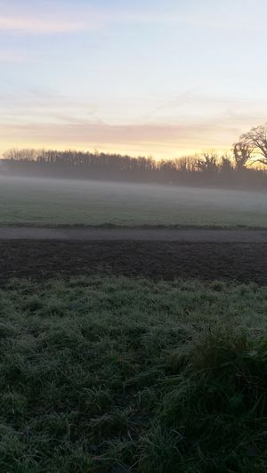 7am Field Agriculture Sunset Nature Rural Scene Tree Beauty In Nature Fog Sun Day No People Outdoors Landscape Tranquil Scene Freshness