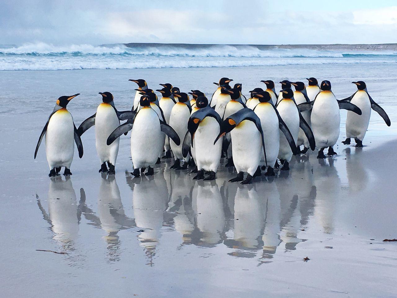 Animal Themes,  Animal Wildlife,  Animals In The Wild,  Beach,  Beauty In Nature