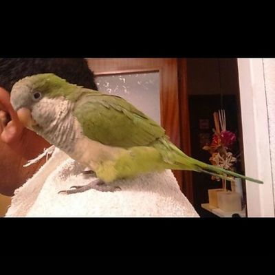 ParrotWill Participate In Britain 'sGot Talent 2016 Soon