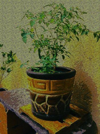 Plant Lover Flower Pot Jalapeno San Luis Potosí Home Is Where The Art Is Color Palette