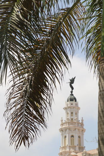 Tree Palm Tree No People Architecture Statue Building Exterior Sky Outdoors Day Havanna, Cuba Adapted To The City Adapted To The City With Land Rover