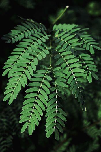 Leaf Social
