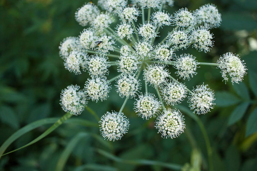 Beauty In Nature Blooming Close-up Day Flower Flower Head Fragility Freshness Green Color Growth Nature No People Outdoors Plant