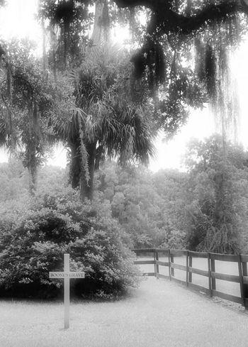 Boonehallplantation Boonehall Plantation Charleston Southcarolina Blackandwhite Photography Art Monochrome Grave Cemetery