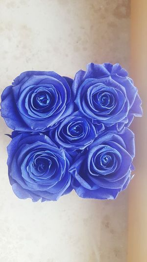 Blue Indoors  Table Hardwood Floor Wood - Material High Angle View No People Flower Day Close-up Roses Blue Wax Blue Rose Lovely Loyalty Permanence Love And Romance
