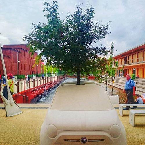 ONE TREE... INTO ONE 500! Expo Expo2015 Expomilano2015 500 Cinquecento Fiat Fiat500 Car Auto Crazypic Trees Alberi Enjoylife Enjoying Secret Milano Water World