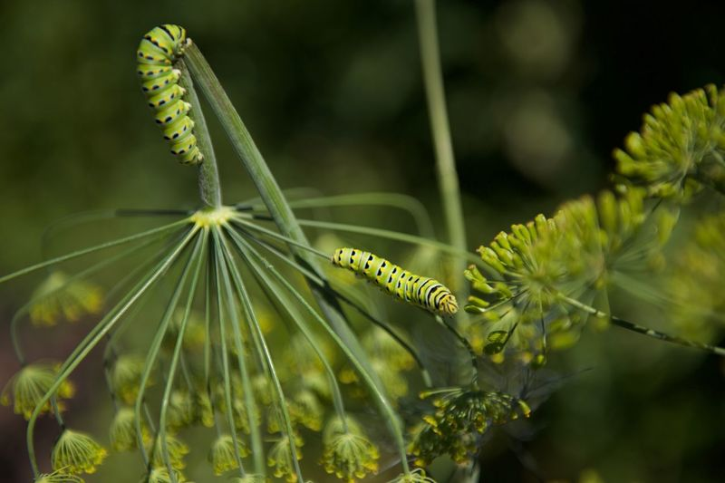 Close-up of caterpillars on plant