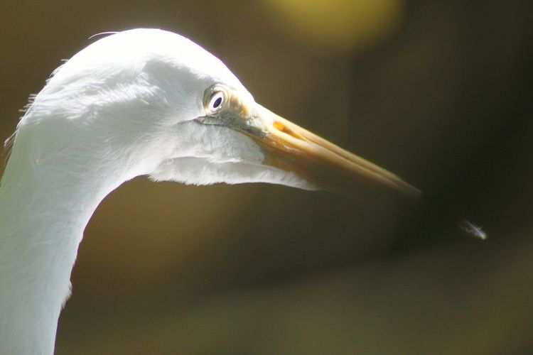 Close-up of heron