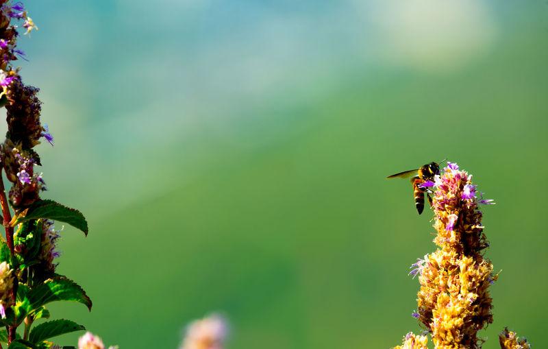 The honey bee Nature Nature Photography Naturelovers Honey Bee Flower Greenery Lavasa Fun Travel Photography Travel Stories
