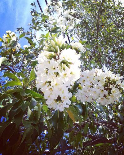 Naturaleza🌾🌿 Flowers Beautiful Day Eyemphotography Savetheearth