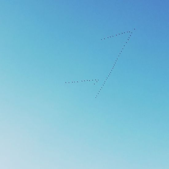 south Flying Large Group Of AnimalsAirplane Day No People Sky Flock Of Birds Outdoors Bird Airshow Clear Sky Animal Wildlife Animal Themes Animals In The Wild Migrating Nature Beauty In Nature