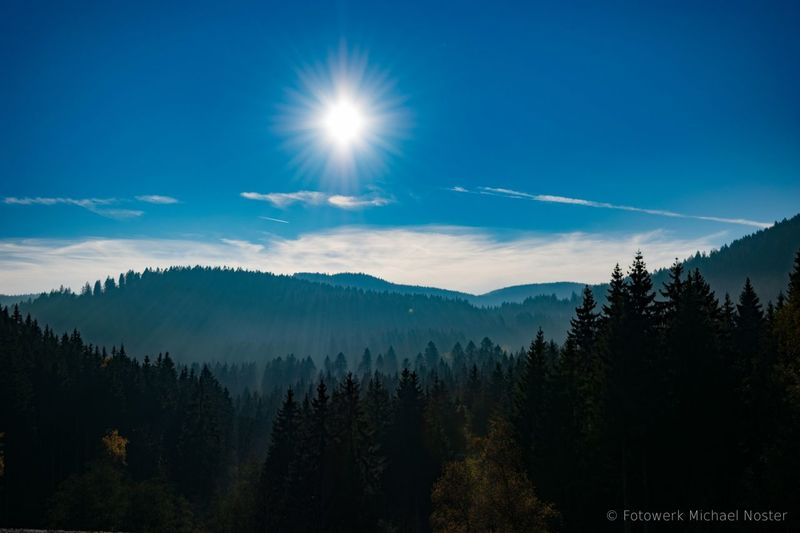 Forest Tree Landscape Mountain Nature Fog Outdoors Day Black Forest