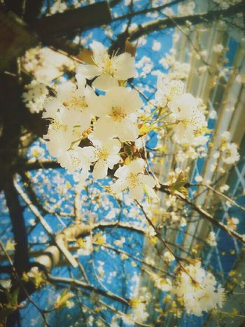 Spr°ng Nature Blossom Flora Beauty In Nature Springs