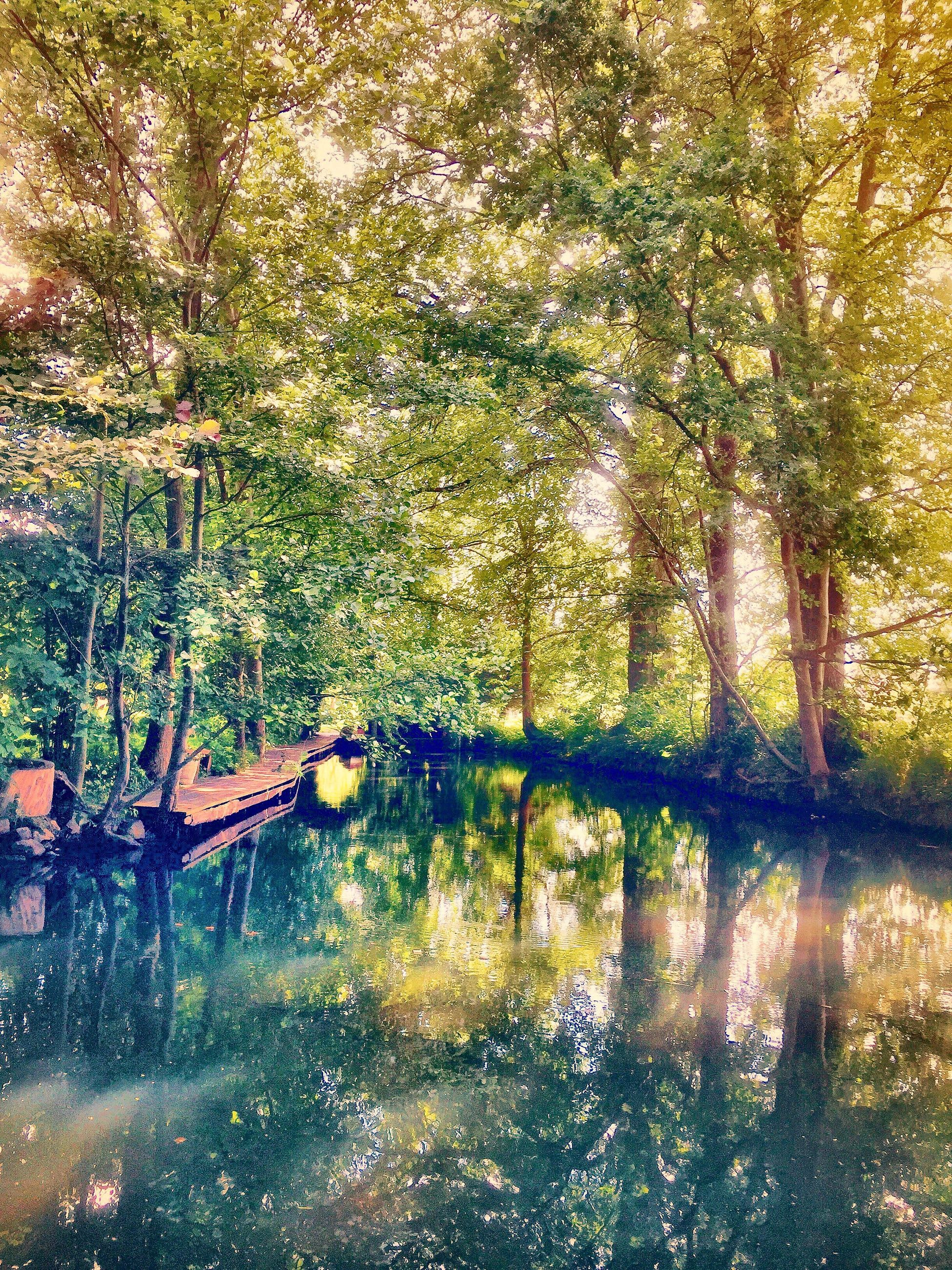 tree, nature, forest, outdoors, day, reflection, no people, tranquility, growth, beauty in nature