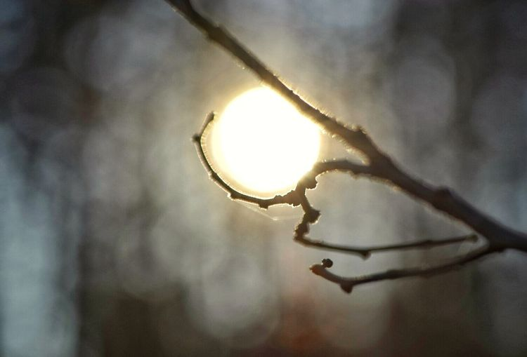 Playing With The Sun Sunset Winter Sunset EyeEm Outdoors Country Living Summertime Blues Godsartwork Thesmallestlittlethings Happigramma EyeEm Best Shots EyeEm Gallery Stoneville, Nc Godsmiles Eyeem This Week Reflection Essence Of Life Soulshine Branches Tree Branches Perfect Circle Perfect Day No People Peace Of God Outdoors Beauty In Nature
