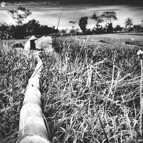 Today Motivation For Me.. Eye4photography  for full cilor visit my IG: @yosforever Eyemnaturelover Ciremai's Mountain, Kuningan West Java Blackandwhite