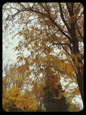 TreePorn Ailine Filter