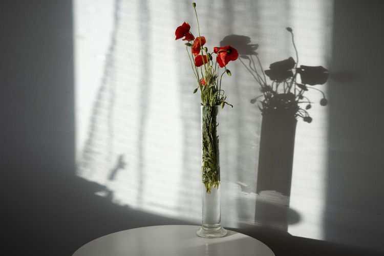 Close-up of red flower vase on plant at home