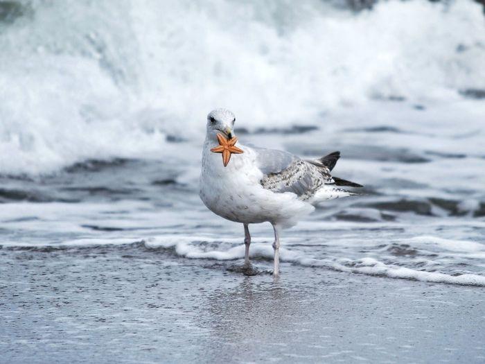 Bird on beach during winter