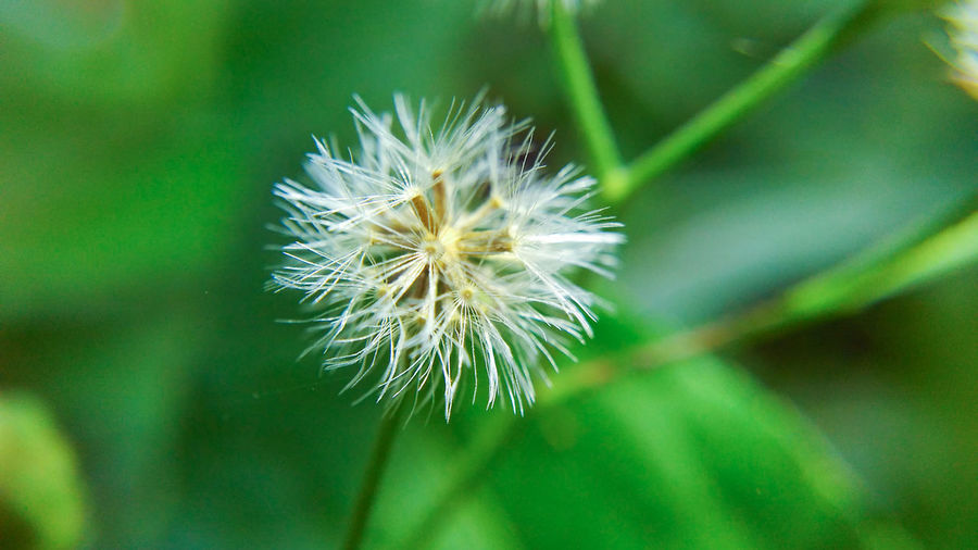 Macro Narrow Depth Of Field Nature Plant Close-up Beauty In Nature