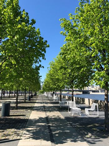 Moscow Muzeon Absence Architecture Chair Clear Sky Footpath Green Color In A Row Muzeonpark Nature No People Outdoors Park Plant Seat Summer Sunlight Tree Treelined The Great Outdoors - 2018 EyeEm Awards