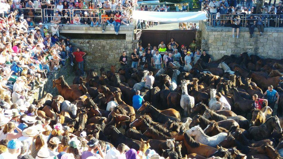 Galicia, Spain Sabucedo Rapa Das Bestas Tradition Fiesta Traditional Culture Pontevedra Galicia,España