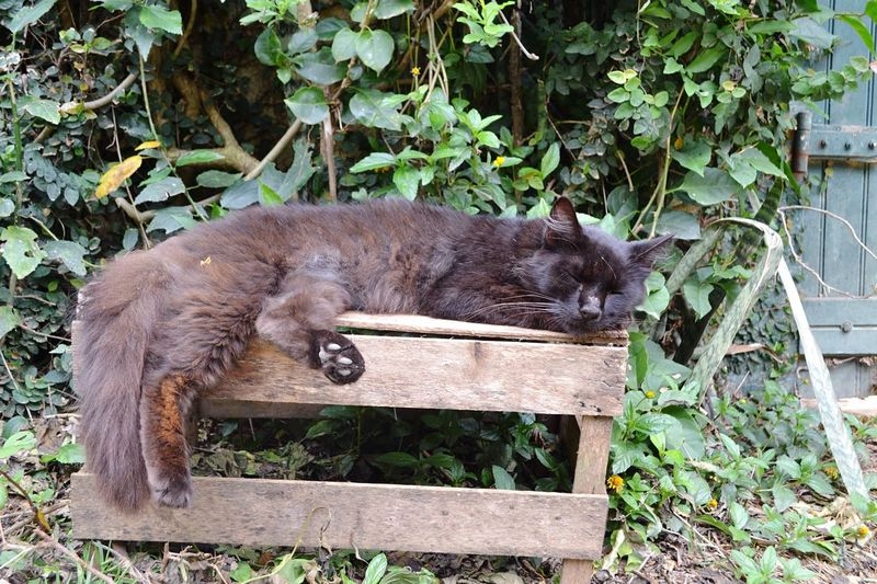 Black cat resting in garden Animal Animal Themes Mammal Plant Animal Wildlife Vertebrate One Animal Day No People Animals In The Wild Nature Relaxation Outdoors Wood - Material Domestic Animals Sleeping Growth Boundary Plant Part Cat