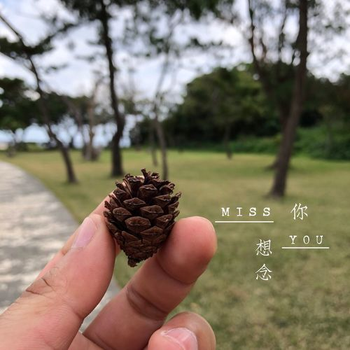 In my mind... Pine Cone Pine Tree Goodnight Germany Goodnight For You ;-) Musm 想念你 Miss You Missing You IPhone X IPhoneography Plant Details Of My Life Nature_collection Beauty In Nature Nature Lover Nature Photography Nature_collection Nature Pine Cone Pine Tree Focus On Foreground Tree Human Hand
