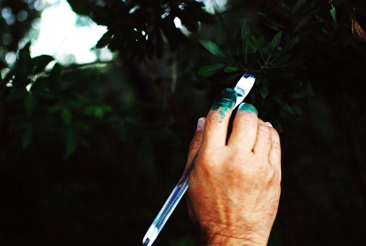 Close-Up Of Hand Holding Paint Brush