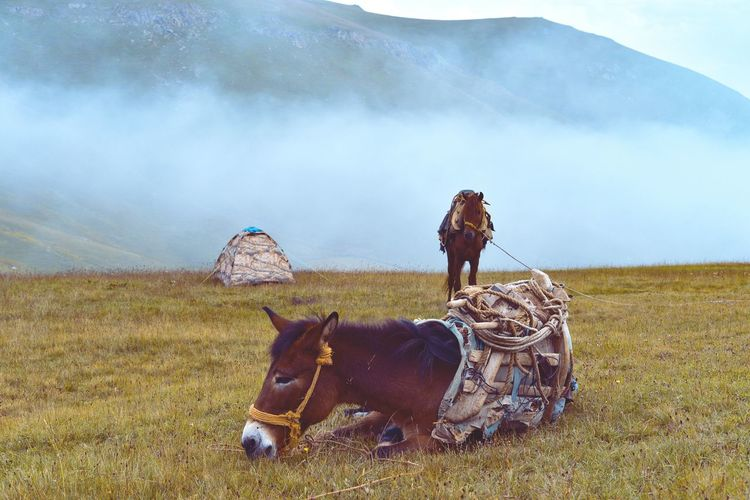 Horses next to tent sitting on grass against cloudy sky