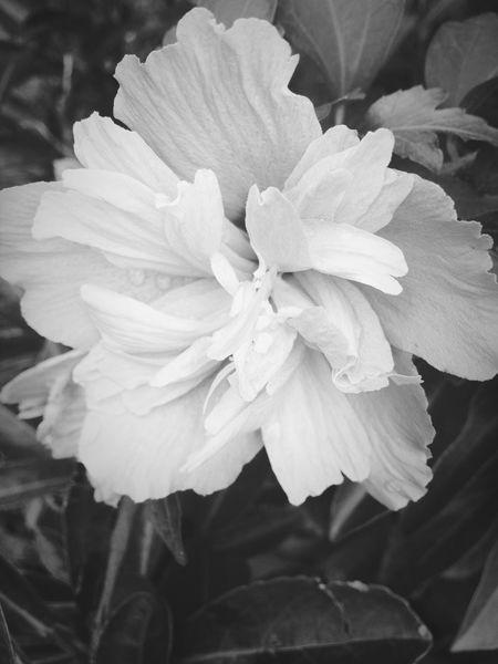 一朵不知名的花