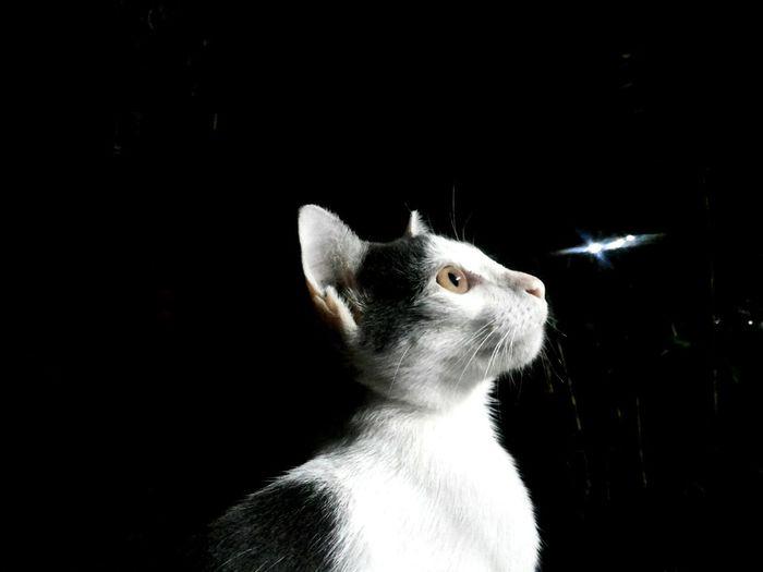 ว่าไงเพื่อน Cat♡ Cute Pets