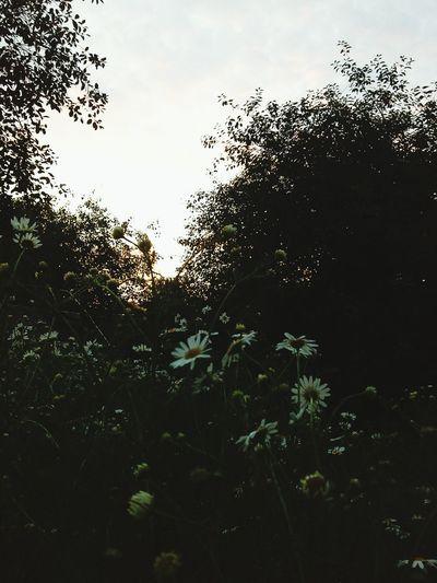 ромашковая поляна Nature природароссии Natural Beauty