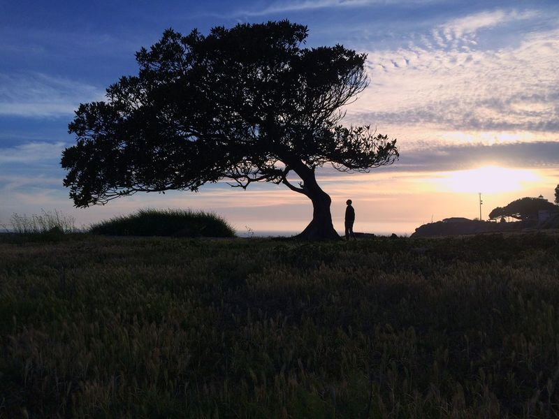 Once upon a moment EyeEmNewHere Tree Sunset