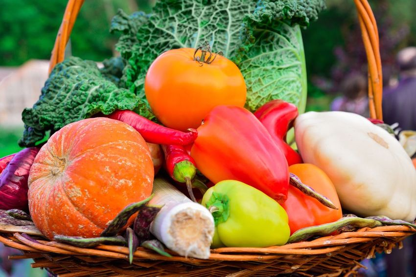 vegetables Vegetable Basket Food And Drink Healthy Eating Freshness Variation Food Tomato No People Raw Food Red Bell Pepper Turnip Day Close-up Squash - Vegetable Outdoors