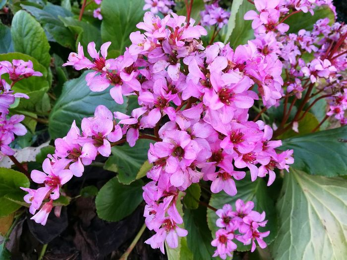 Flower Growth Nature Plant Pink Color Close-up Petal Blooming Spring Flowers Plants Plants And Flowers Growth Pink Flower Pink Flowers Pink Flowers In Bloom Nature