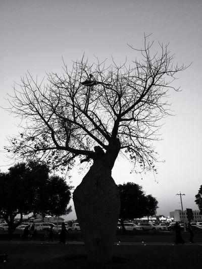 Blackandwhite Nature Tree Silhouette Sky