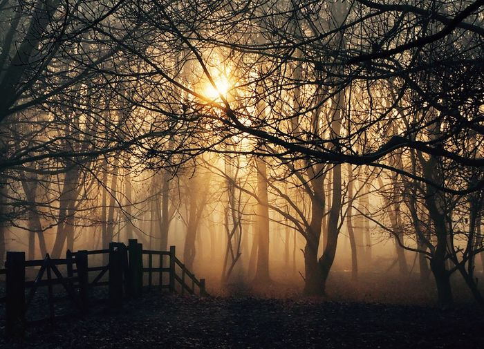 Tree Nature Sunlight Mist Gate Silhouette