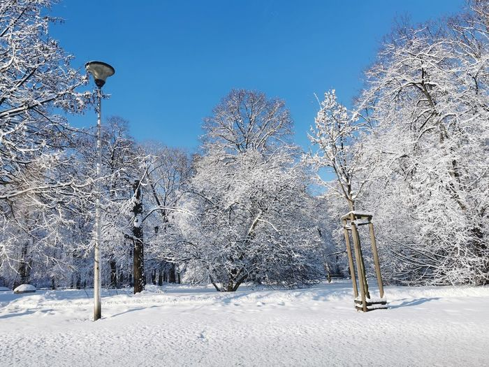 Frozen trees on field against sky during winter