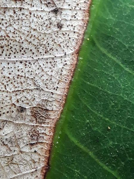 half deaf leaf green and grey closed up macro photography Close-up Leaf Vein Leaf