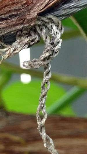 Eye4photography  Close-up High Angle View Imperfect  Masterlytake Natural Texture Interlaced Hangingthere