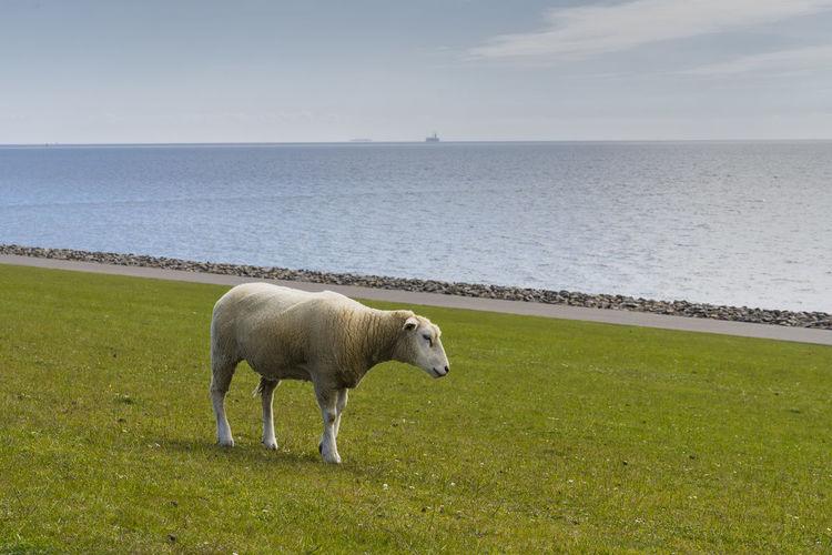 Horse standing in sea water