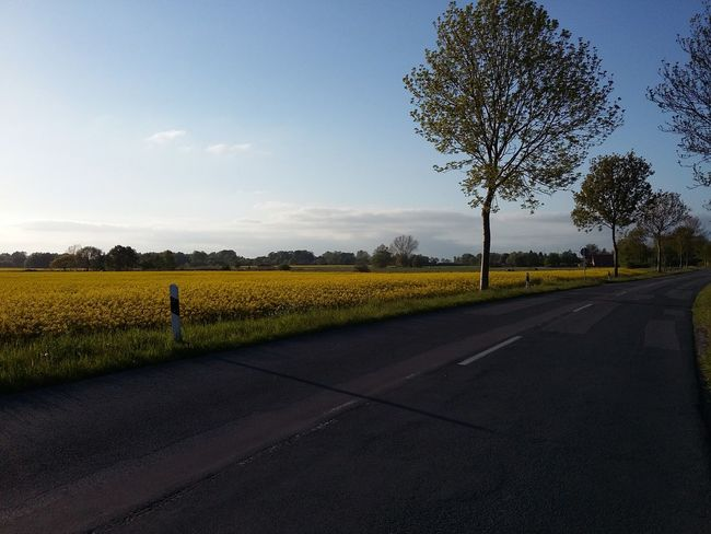 The Road. · Varel Germany Friesland Fields Tree Blue Sky Spring Spring Colors Bye Bye Winter Beauty The Purist (no Edit, No Filter)