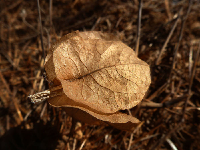 Close-up of dry leaves