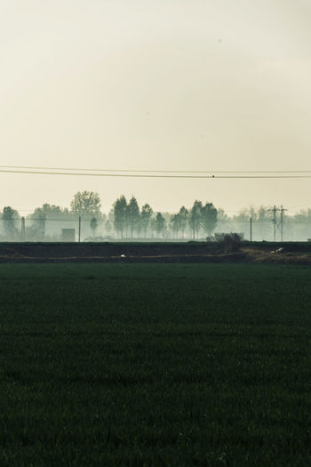 Field Environment Landscape Green Color Valley Tree Foggy Fog