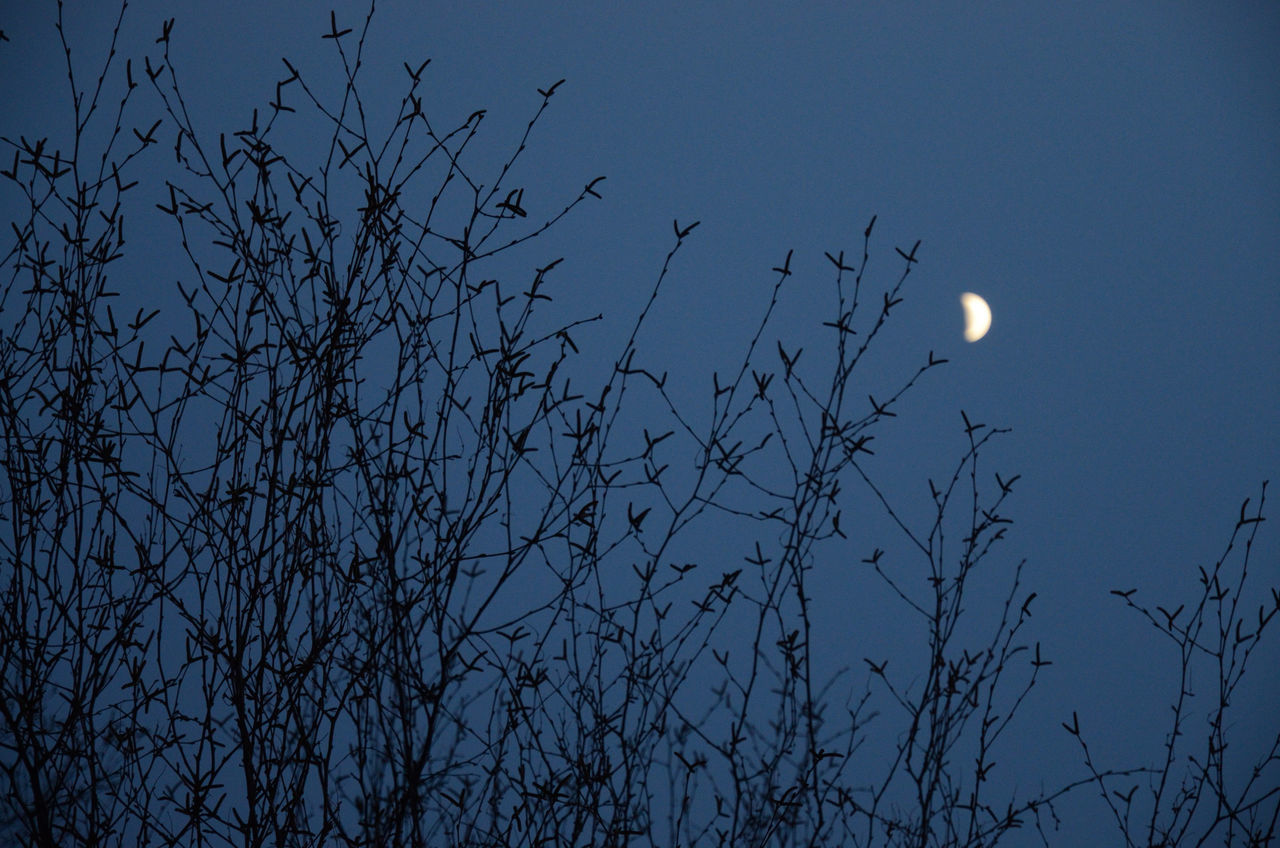 Moon over twigs
